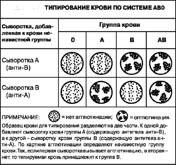 Группы крови и резус-фактор.