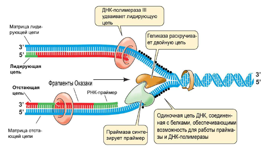 основы генетики.