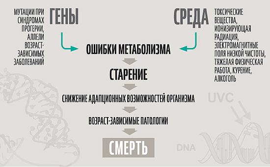 Генетика старения и долголетия
