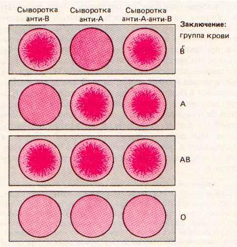 Группы крови человека.