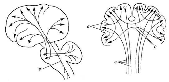 головного мозга (схема)